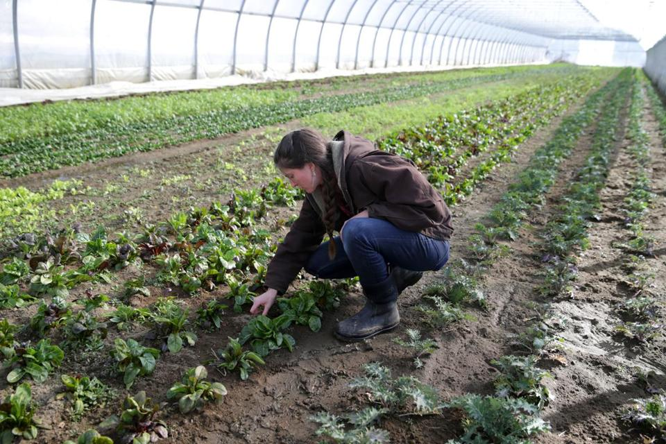 Fueling the Farm-To-Table Movement, with Lessons from Toyota